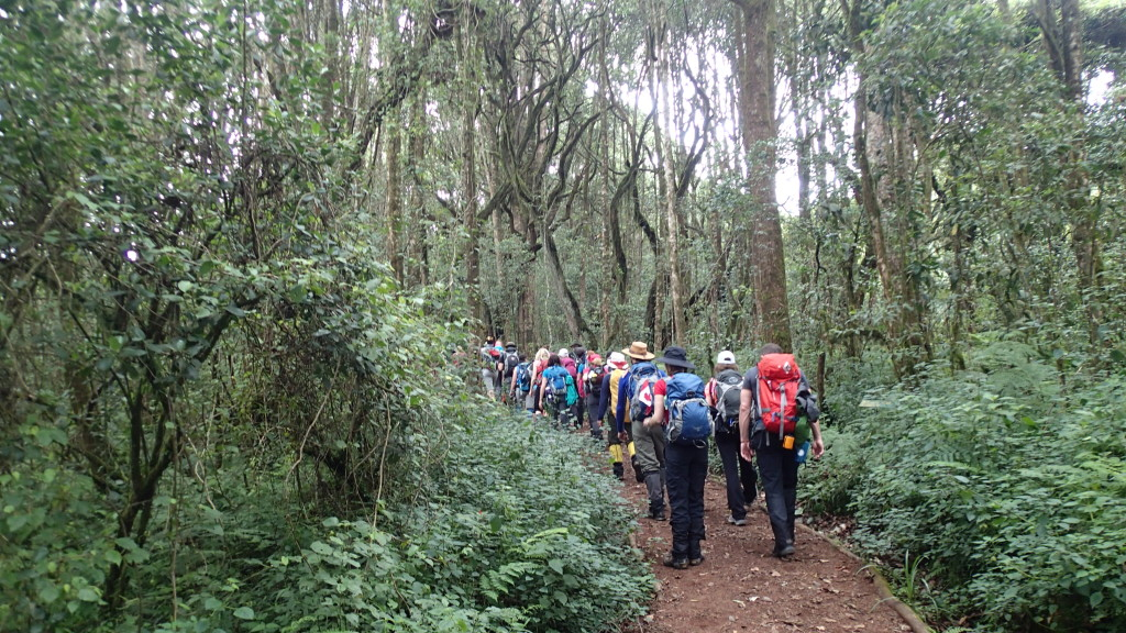 Through the rain forest on the lower slopes of Mt. Kilimanjaro above Machame Gate